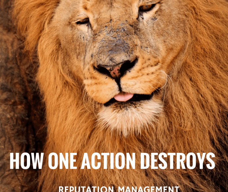 How One Action Can Destroy More than a Personal Reputation – Killing of Cecil the Lion